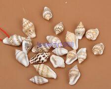50pcs Drilled Sea Shell Ocean Aquarium Craft Decor Natural Mini Conch 10-15MM