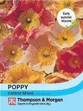 Thompson & Morgan - Flowers - Poppy Iceland Mixed - 1900 Seed