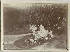 PHOTO ANCIENNE - VINTAGE SNAPSHOT-ENFANT FLEURS JARDIN BLAGUE GAG DRÔLE-FLOWERS