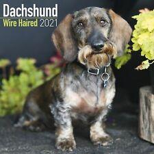 Wirehaired Dachshund Calendar 2021 Premium Dog Breed Calendars