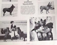 rare 1937 Kennel KER MANO Schipperke Dog photographs and breed description