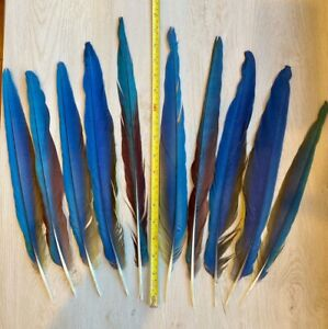 "Lot of 10 Blue & Gold, Harlequin & Green Wing Macaw Tail Feathers 13"" to 18"""