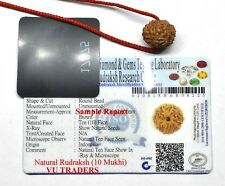 10 Mukhi Rudraksha  / Ten Face Rudraksh Java Bead Lab Certified Size 14-16 MM