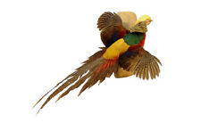 Flying Golden Pheasant Professional Taxidermy Mounted Animal Statue Home Gift