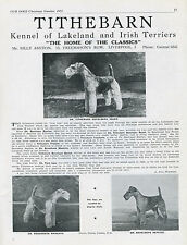 LAKELAND TERRIER OUR DOGS 1951 DOG BREED KENNEL ADVERT PRINT PAGE TITHEBARN