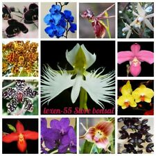100 Orchid Flowers Seeds 20 Kinds Rare Beautiful Perennial Plants in Home Garden