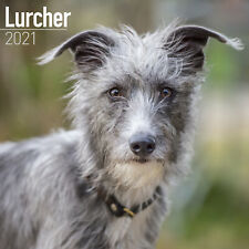 Lurcher 2021 Dog Breed Calendar 15% Off Multi Orders!