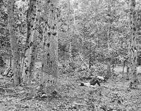 Damaged trees on Culp's Hill Battle of Gettysburg 1863 New 8x10 Civil War Photo