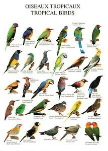Postcard, Oiseaux Tropicaux, Tropical Birds by Nouvelles Images S.A 1999 OJ0