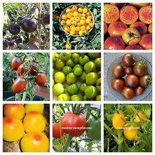 Historische Tomaten, 20 Sorten, getrennt verpackt, von unserer Farm, 200 Samen