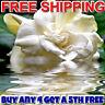 GARDENIA Diffuser Fragrance Oil Refill VEGAN/CRUELTY FREE