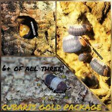 *No Reserve* Cubaris Isopod Bundle! Reptile Terrarium Cuc *Free Shipping*