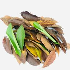 Dried Rabutan Nephelium lappaceum Leaves Aquariums Tannin Appearance Bio Breeze
