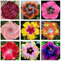 100Pcs Gemischte Farbe Hibiskus Blume Samen Eingetopft Plant Garten Bonsai Dekor