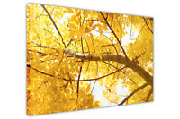 YELLOW TREE CANVAS WALL ART PRINTS FRAMED POSTER DECORATION PICTURES NATURE