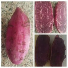 10   Organic Purple Sweet Potato Slips/cuttings for Planting.