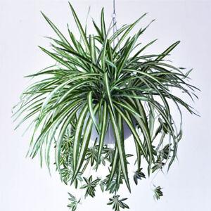 Faux Artificial Spider Plant Chlorophytum Comosum Greenery Garden Home Sup N UK