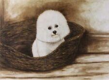 BICHON FRISE TOY DOG FINE ART LIMITED EDITION PRINT