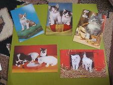 lot of 5 vintage real cat postcards lot C(free ship $20 min)