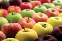 50 Apple Tree Fruit Seeds Malus Mixed Perennial Bonsai Plant Home Garden Decor