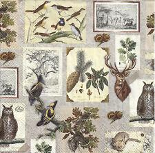 Lot de 4 Serviettes papier Botanique Oiseaux Hibou Decoupage Collage Decopatch