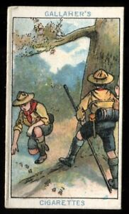 Tobacco Card, Gallaher, BOY SCOUT SERIES, Brown Back, 1911, Tracking, #17