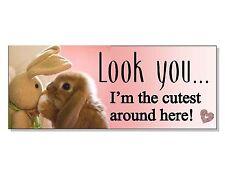 Cute bunny lapin signe plaque maison jardin cage maison Hutch Porte Mur Chargeur jouet