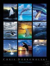 """NEW 18x24"""" Whales & Dolphins Art Print, by Dobrowolski"""