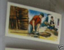 #21 birch brooms card