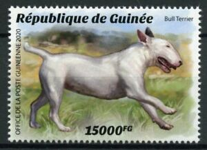 Guinea Dogs Stamps 2020 MNH Bull Terrier Dog Breeds Domestic Animals 1v Set