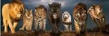 "Jigsaw puzzle Animal Wild Big Cats 750 piece panographic 36"" NEW made in the USA"