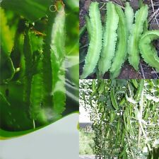 3 Original Pack Seeds Winged Bean Seeds Psophocarpus Pea Organic Vegetable