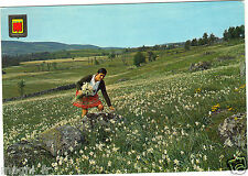 Féerie du printemps - Les narcisses (H6696)