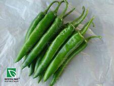 NEW 80 seeds green long chili pepper Capsicum annuum L RARE ITEM THAILAND
