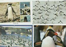 31 postcards: PENGUIN BIRDS