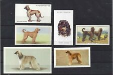 Rare 1931 - 1979 Uk Dog Art Cigarette Trade Card Collection x 6 Afghan Hound