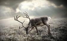 Enmarcado Impresión Renos (Imagen Cartel Ciervo Venado Elk Corzo Arte Animal Alce)