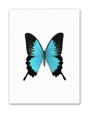 PEACOCK ROYAL TURQUOISE BUTTERFLY Picture Canvas art Prints