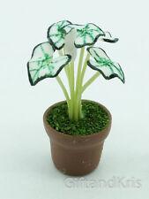 Clay Dollhouse Miniature White Foliage Tree Caladium Plant Pot - Foliage046