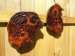 2 Authentic Old Growth Ancient Pecky Burl Sinker Cypress Wood Cookies Wall Art