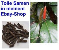 i! der LANGE PFEFFER !i Bio-Gewürz selber ernten Zimmerpflanze Samen Saatgut