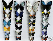 Butterfly Magnets Set of 24 Multi-Color Insects Refrigerator Magnets Gifts