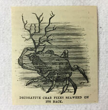 small 1880 magazine engraving~ Decorative Crab