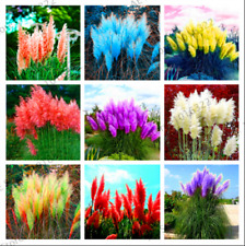 Pampas Grass 400 PCS Seeds Bonsai Colorful Home Garden Plants Decorative 2021 R