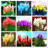 Pampas Grass 400 PCS Seeds Bonsai Colorful Home Garden Plants Decorative 2021 R