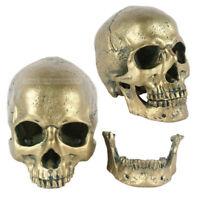 Realistic 1:1 Human Skull Model Anatomical Medical Skeleton Antique Bronze Decor
