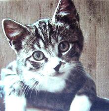 Deko Wandbild Kätzchen Katze Kater Bild Keramik Fliese Geschenkidee Mitbringsel