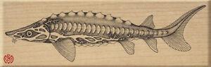 Sturgeon Estuary Fish Meer Image x-rare Rubber Stamp UNMOUNTED NEW