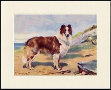 ROUGH COLLIE CHARMING LITTLE DOG PRINT MOUNTED READY TO FRAME
