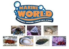 Total CUC Package For Marine Hermit Crabs Snails Algae Eating Package